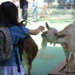 動物ふれあいが好きならおすすめ!横浜近郊の動物園と近県の牧場