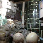 湘南台文化センターこども館に行ってきました